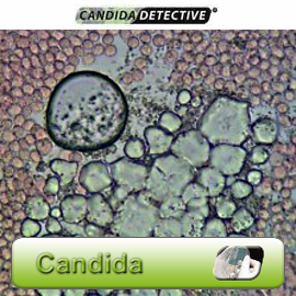 kandydoza test Candida Detective dietetyk rzeszów